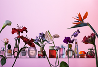 La Vanguardia Magazine - Parfums and flowers